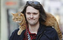 bob_cat.jpg